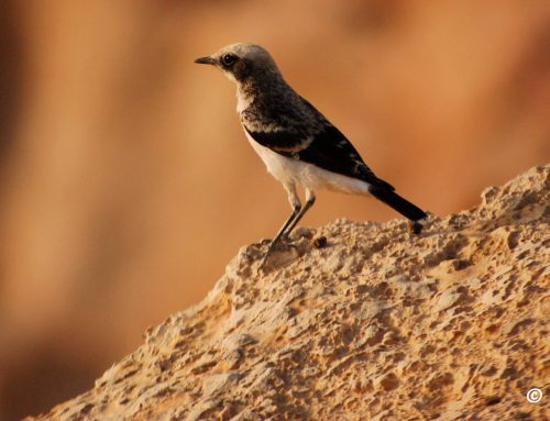 Go bird watching around Petra