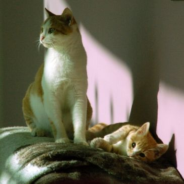 Two cats, Ginger and Pumpkin, as young cats in Petra Fig Tree Villa