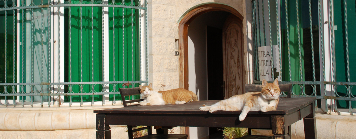 Ginger and Pumpkin the cats of bed and breakfast Petra Fig Tree Villa